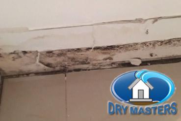Mold removal in Davie