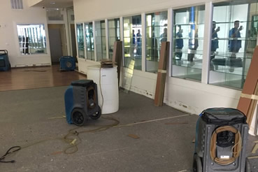Mald removal and water damage repair in Davie